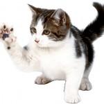 Зачем кошкам удаляют когти